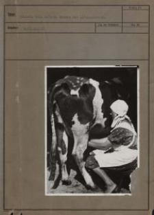 Bäuerin beim Melken : Rombin bei Litzmannstadt