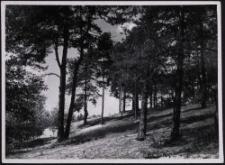 Rombin : Kiefernwald