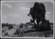 Wacholderlandschaft bei Wilhelmswald